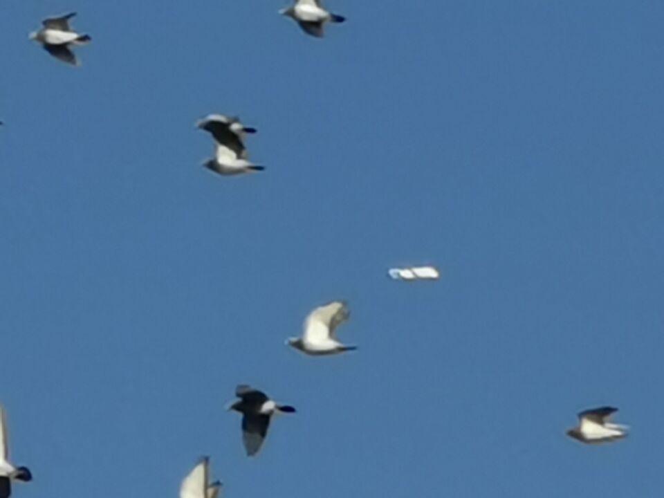 Wit vliegend object Drachten foto