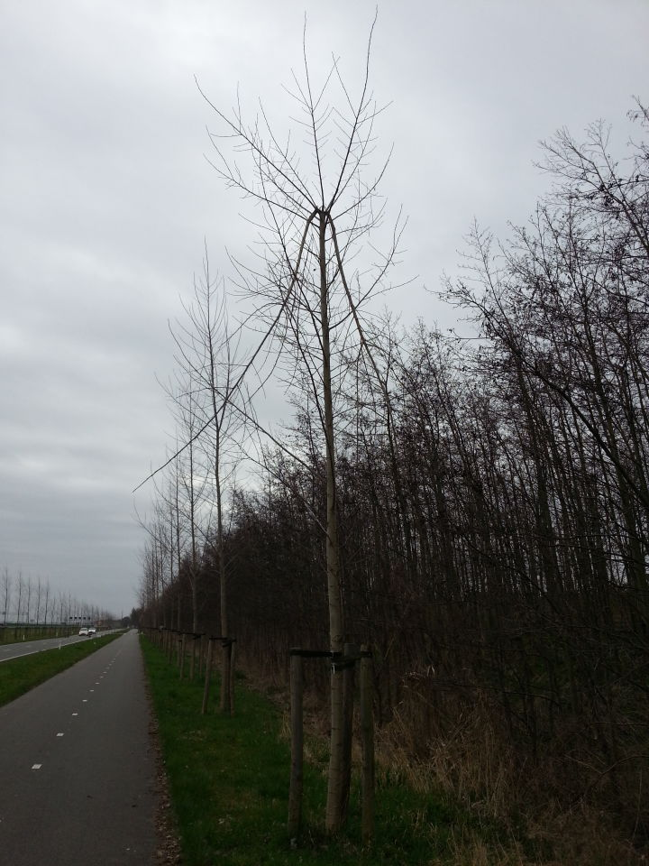 Vreemde breuk in boom na waarneming lichtbol foto